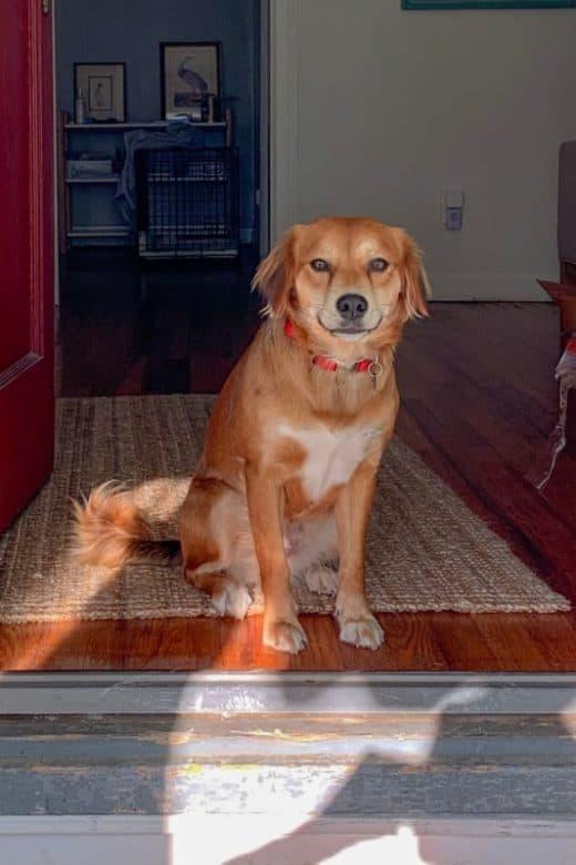 Kan jeg selv slibe hundens kradsemærker i gulvet væk?